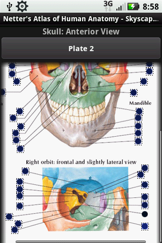 Post image for Netter's Atlas of Human Anatomy comes to life on the Android platform [App Review]