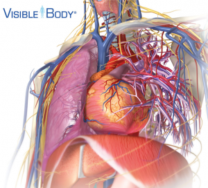 Post image for Top anatomy app 'Visible Body' released in Mac App Store