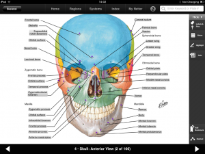 Post image for Netters Atlas of Human Anatomy iPad app is a powerful anatomical reference