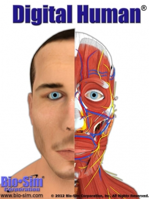 Post image for Grey's Anatomy uses Digital Human anatomy browser app, but is it good enough for real physicians?