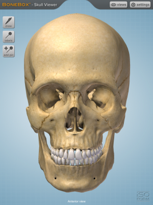 Post image for BoneBox Skull Viewer app for iPad is a 3D medical education tool