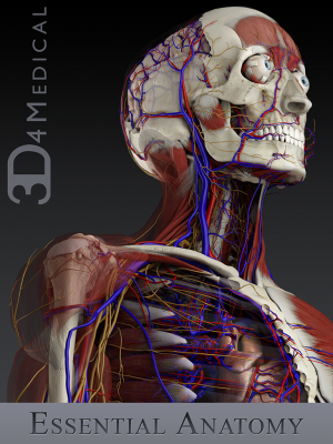 Post image for 3D4Medical launch unique 3D essential anatomy app [exclusive demo]