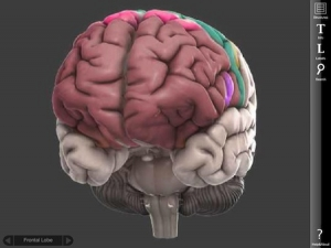 Post image for 3D Brain is an impressive basic neuroanatomy medical app